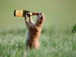 drunk-hahahahahahaha-24255440-1024-768